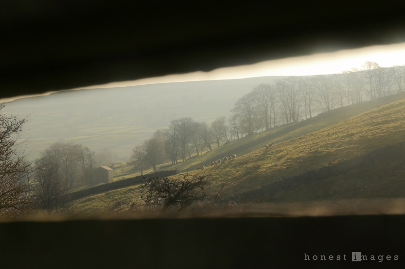 Ripon Photographer, Ripon Child Photography, Natural Light Photography, Child Photography, Landscape Photography, Yorkshire Dales, Swaledale Sheep, Early Morning